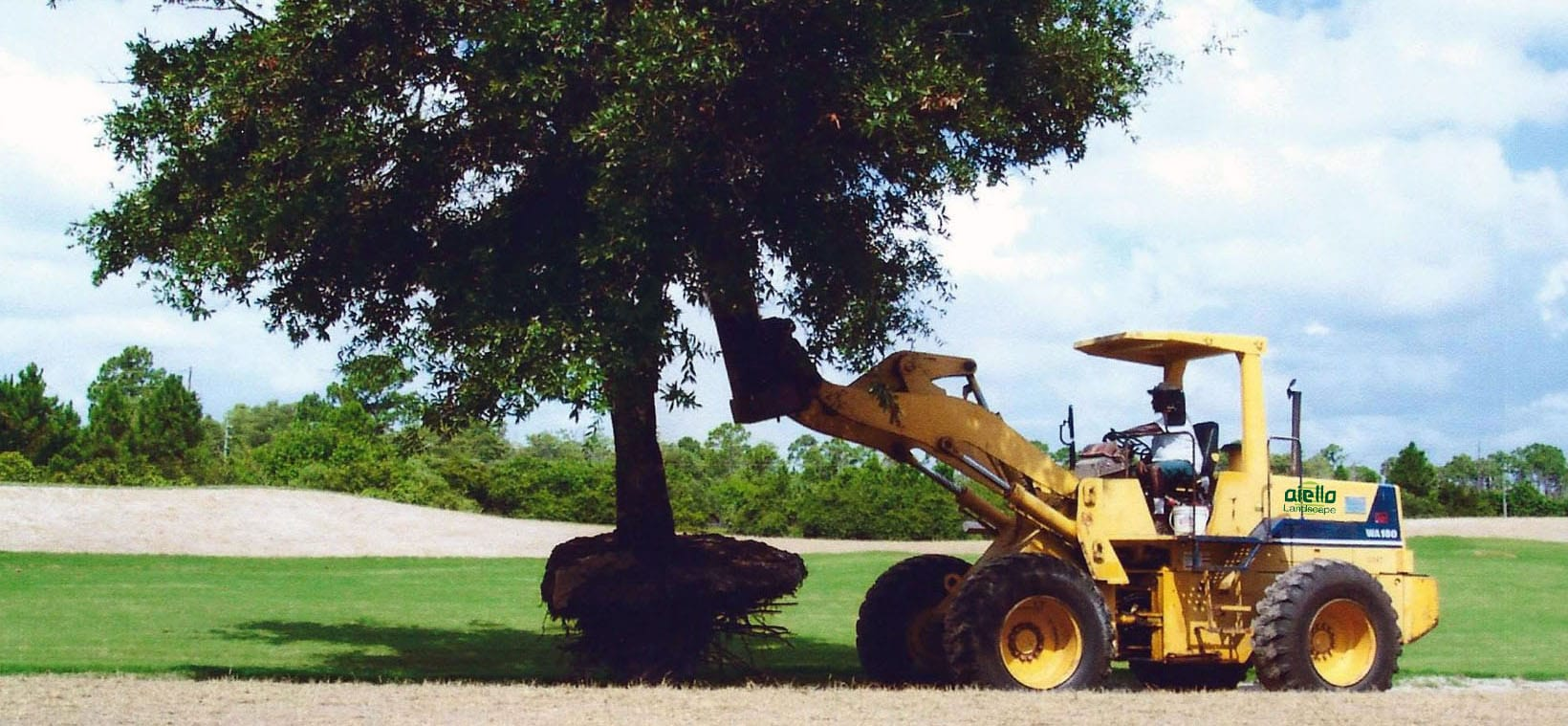 Aiello-Landscape_tree-relocation_Hobe-Sound_golf-club