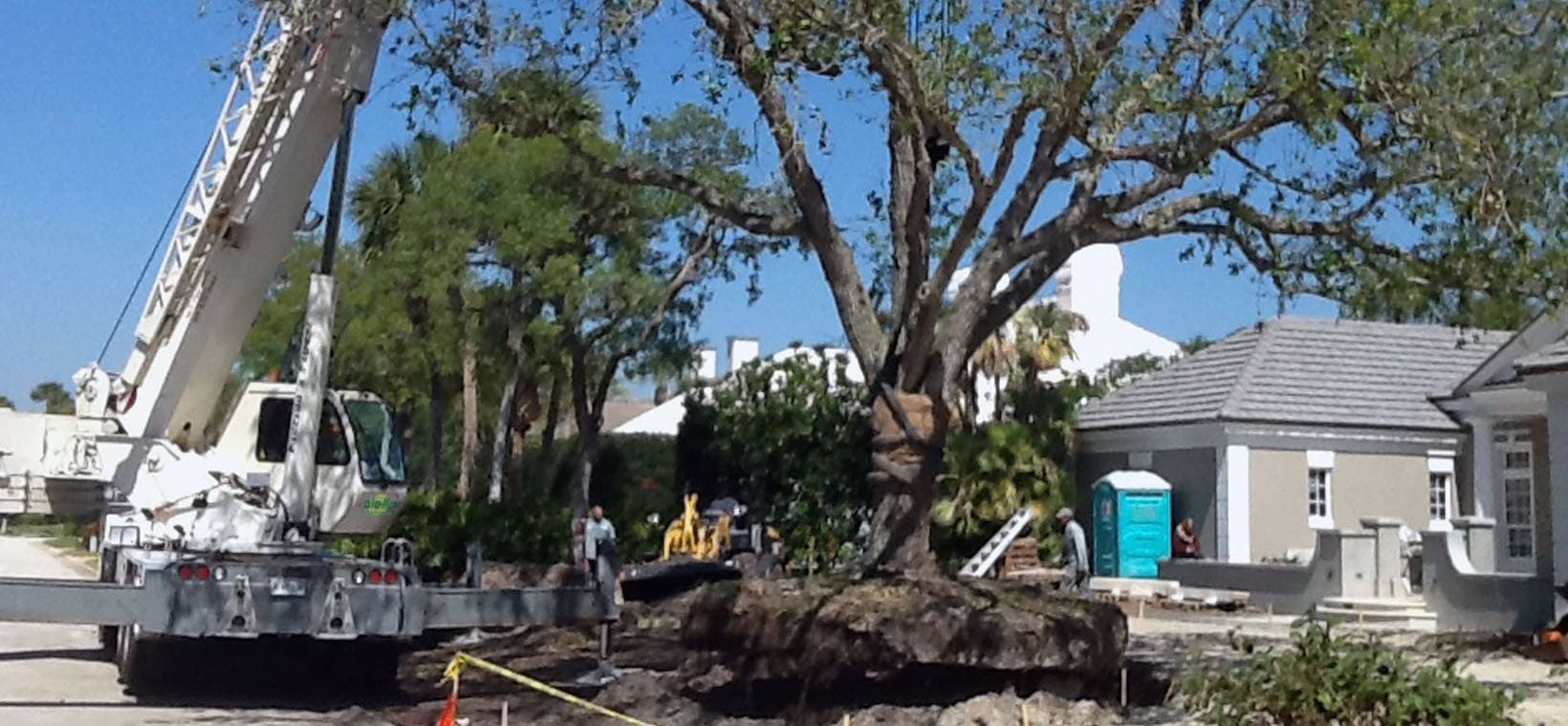 Aiello-Landscape_tree-relocation_Palm-Beach