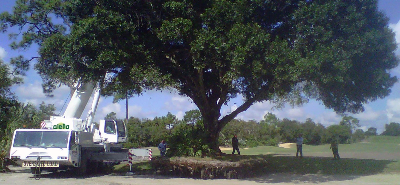 Aiello-Landscape_tree-relocation_golf-course