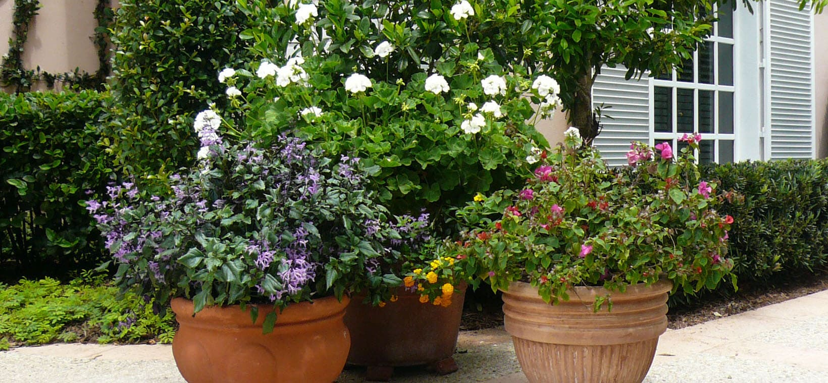 aiello-landscape_custom-potted-plants