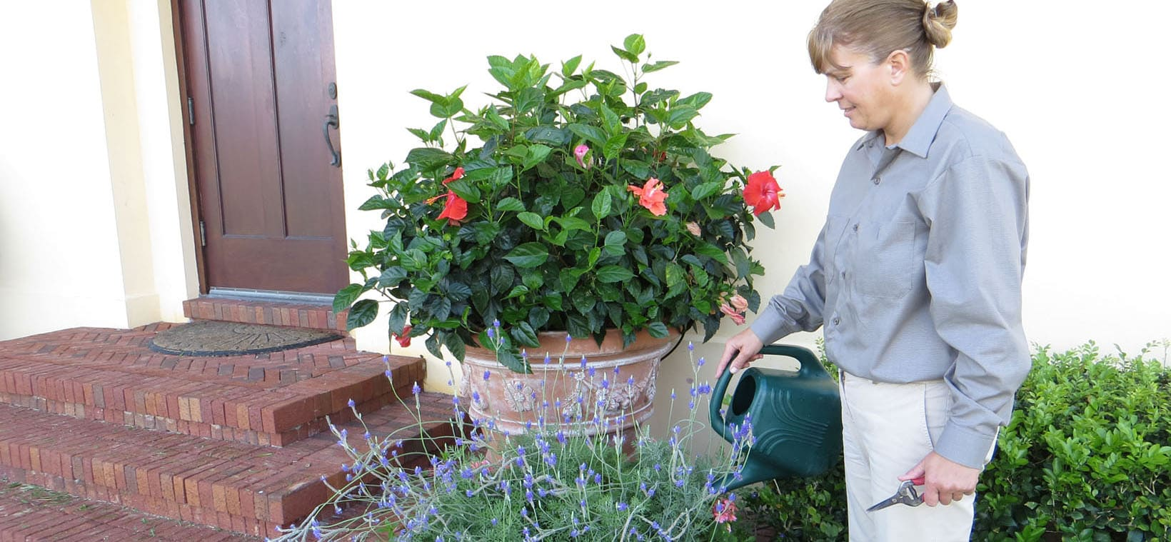 aiello-landscape_potted-plant-care