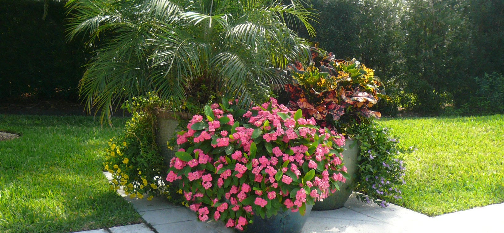 aiello-landscape_potted-plants-backyard