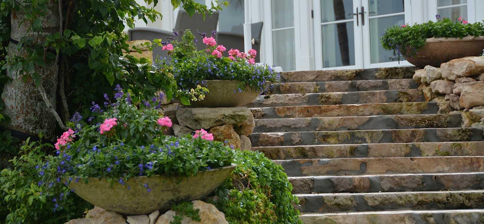 aiello-landscape_container-plants-steps